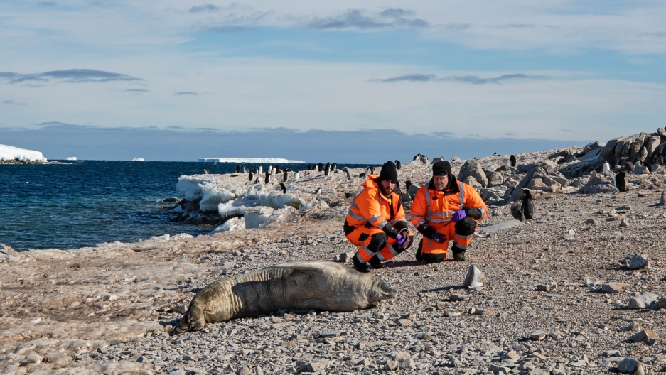 Scientists check out a seal on the shore of one of the tiny Schaefer Islands off West Antarctica's Canisteo Peninsula.