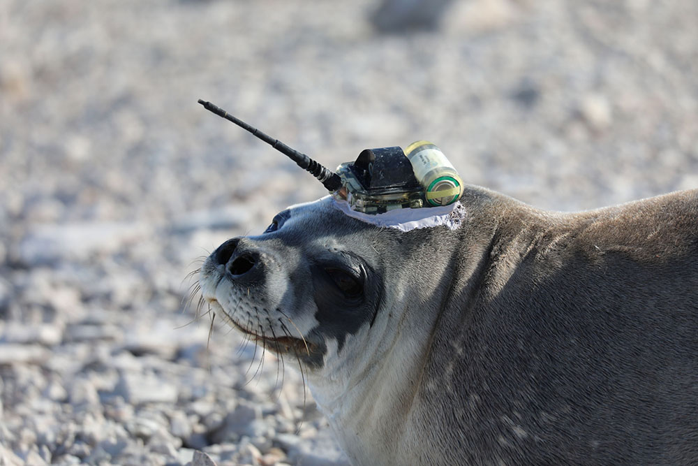 Seal ready for work